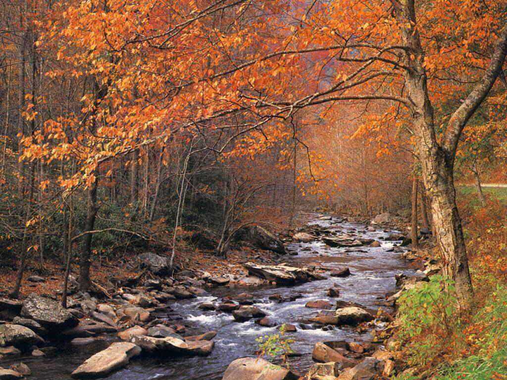 Autumn Winding Brook