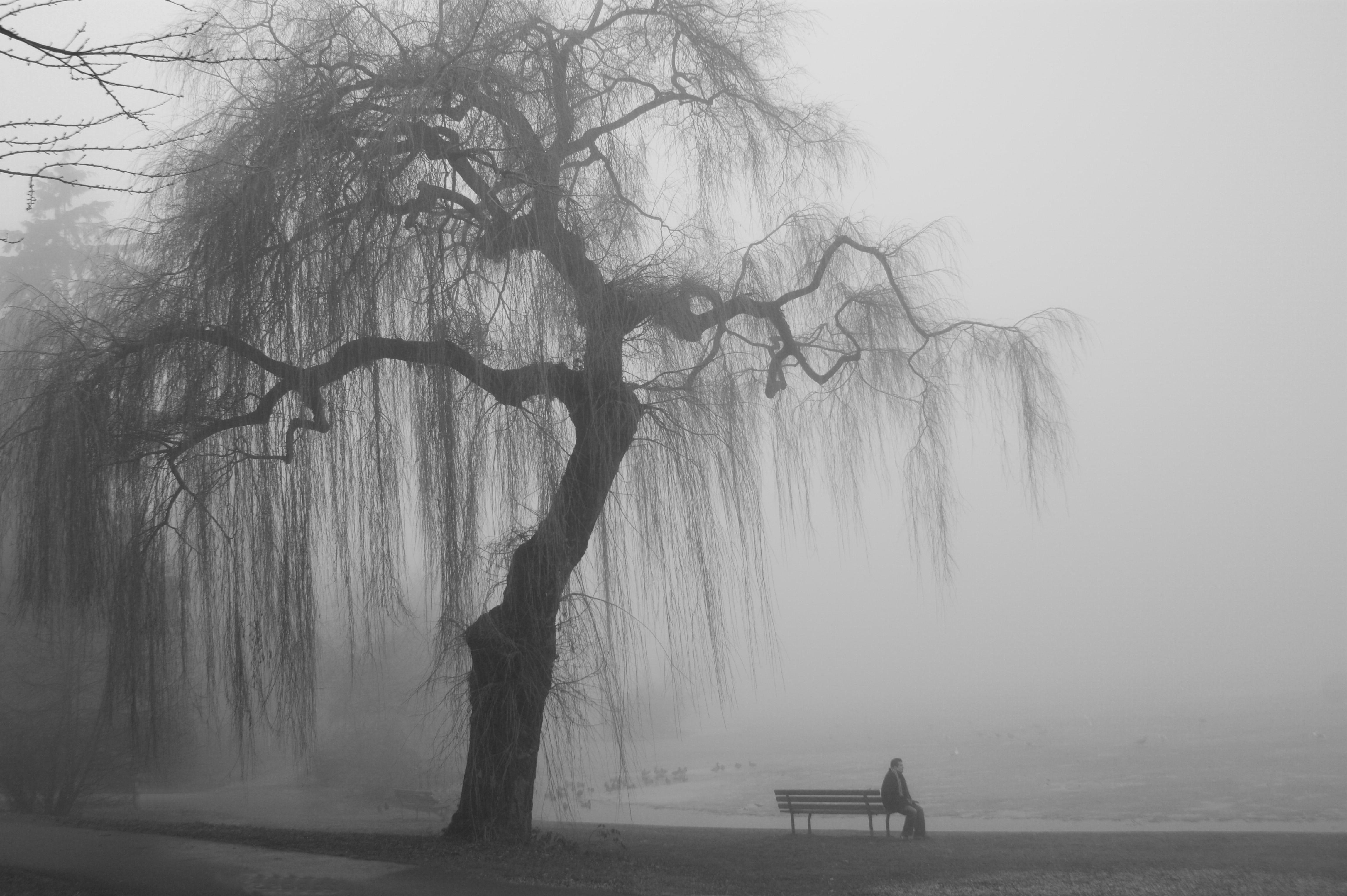 man-bench-willow